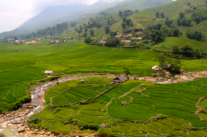 sapa rice terrace fields