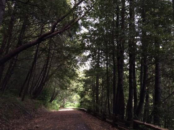 redwoods stanish hickey