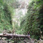 Humboldt Road Trip: Hiking in Fern Canyon